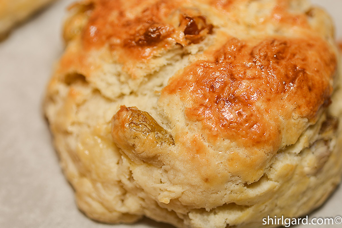 Golden Brown Sultana Scone